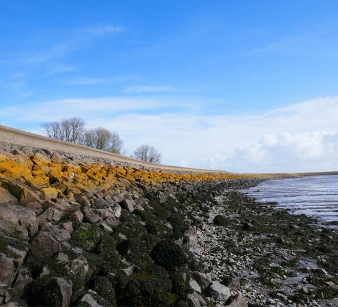 Coast path web