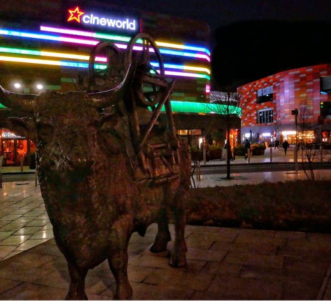 Friars bull night web
