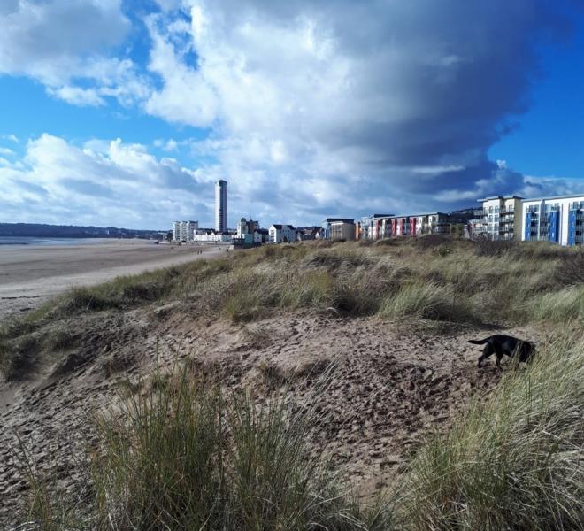Swansea Beach _sml